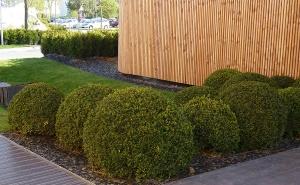 Dekor und Pflege der Grünflächen