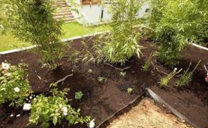 Pflanzen und Accessoires