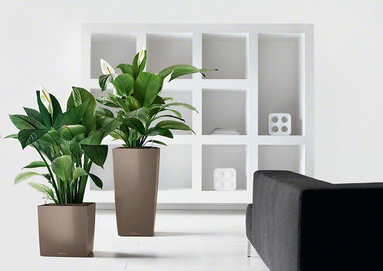 Kunststoff-Pflanzkübel / quadratisch / modern - CUBE - Lechuza