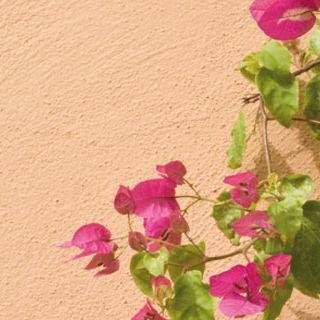 Dekorfarbe / Schutz / Fassade / Außen