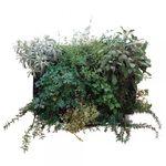 stabilisierter Pflanzrahmen / dichtes Blattwerk / Natur / Innenraum