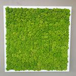 stabilisierte Wandbegrünung / modulare Platte / Natur / Innenraum