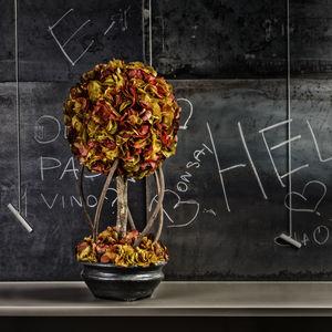 stabilisierte Zierpflanze / Bonsai