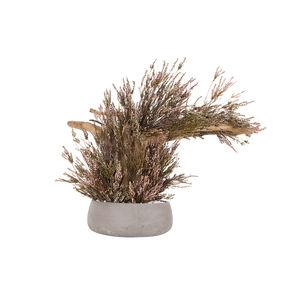 stabilisierte Zierpflanze