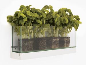 Glas-Pflanzgefäß / wandmontiert / rechteckig