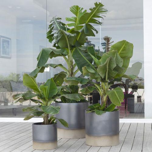 Terrakotta-Pflanzgefäß