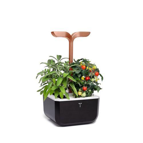 Pflanzkasten für Kräuter / Kunststoff