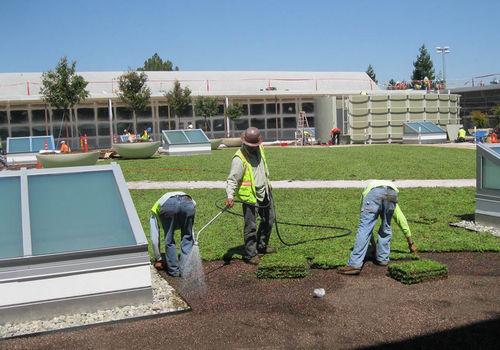 Vorkultivierte Vegetationsmatte / für Dachterrassen / vorbepflanzt