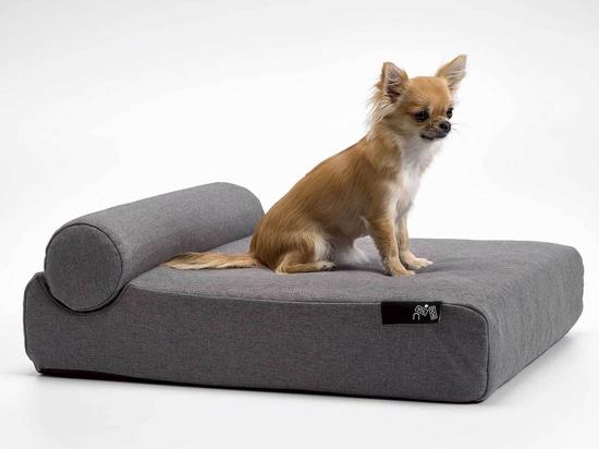 Ein Hundetag in Grau