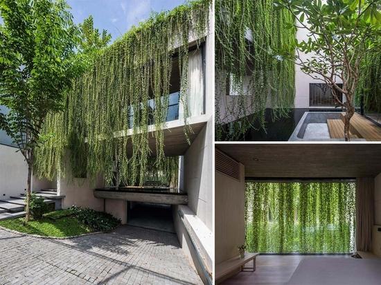 Extensive hängende Pflanzen mildern die Verwendung von Beton in diesem Hausdesign